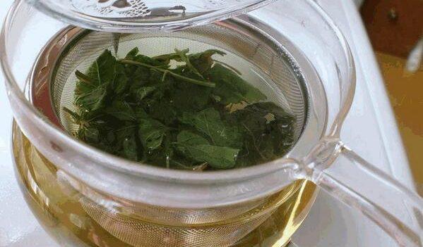 ドクダミ茶の効能知ってますか?実はスゴイ!7つの効能