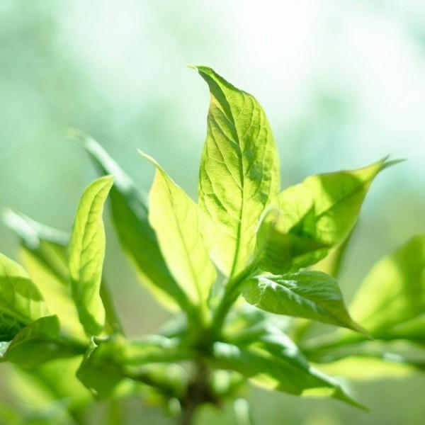 ダイエット中にぴったり、枝豆の栄養価と嬉しい7つの効果