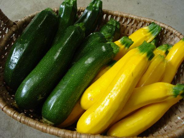 ズッキーニの栄養が生活習慣病を予防する7つの理由